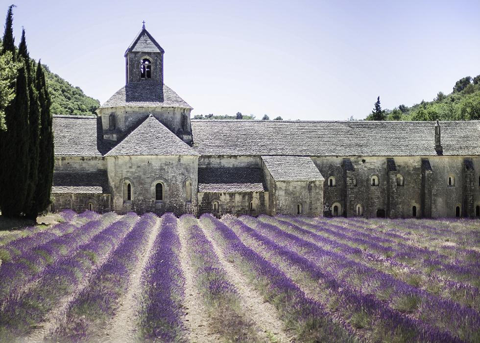 ลาเวนเดอร์ที่โบสถ์ SENANQUE