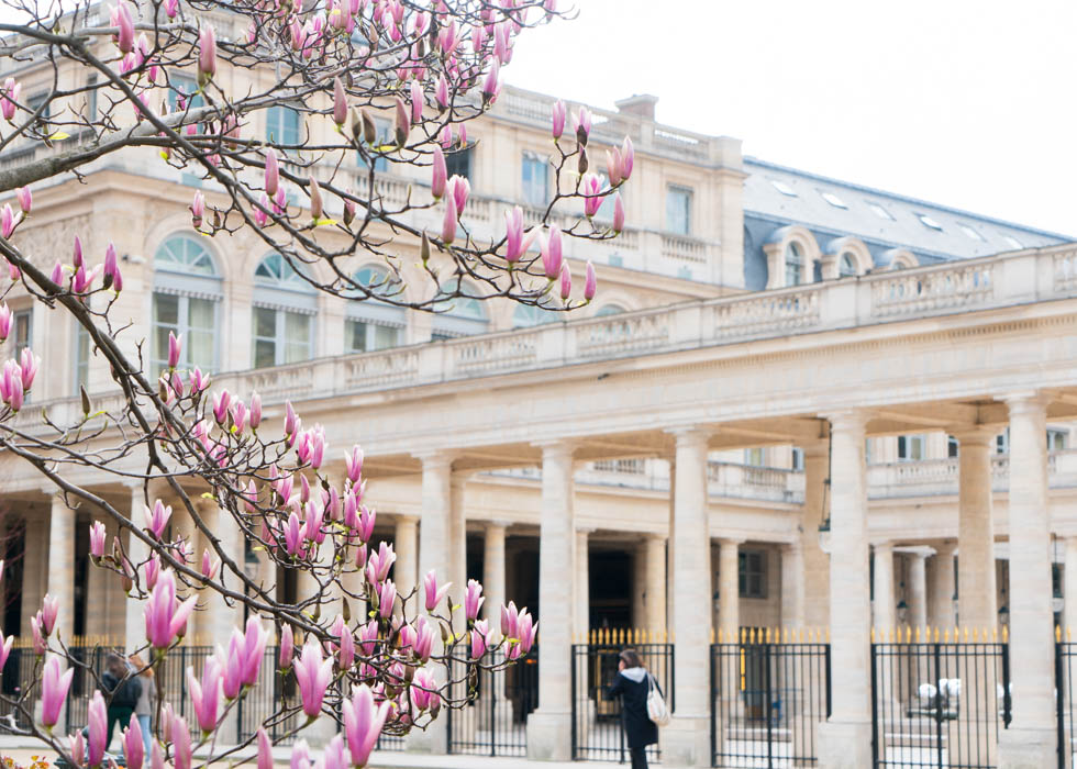 Palais Royal - where to see flowers in Paris
