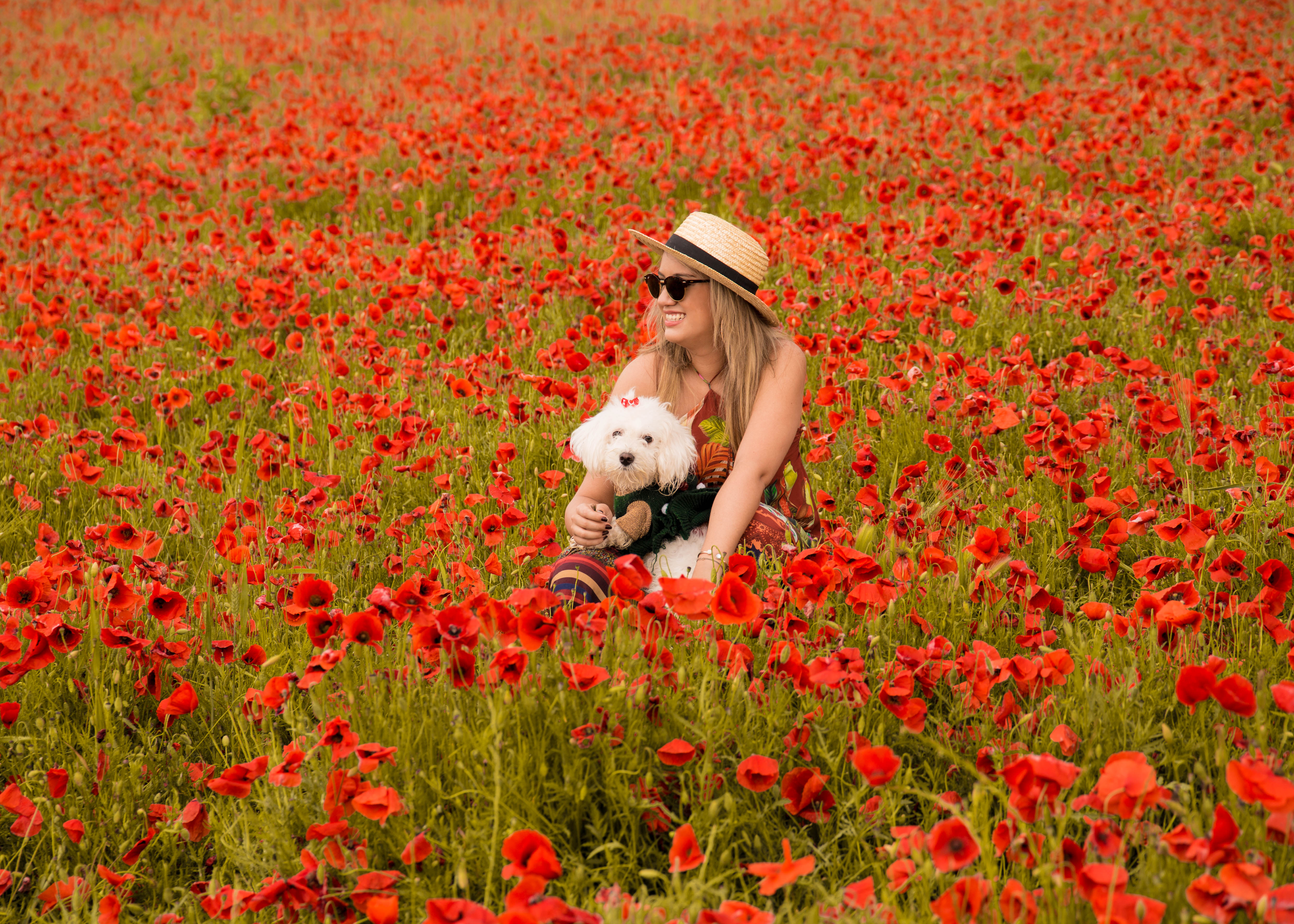 Poppy fields obon paris easy to be parisian as a result it has become difficult to find poppy flowers in the french countryside mightylinksfo