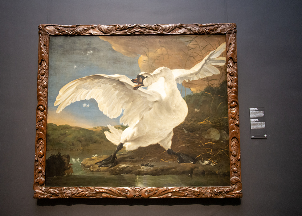 WHAT TO SEE IN RIJKSMUSEUM 5. JAN ASSELIJN - THE THREATENED SWAN
